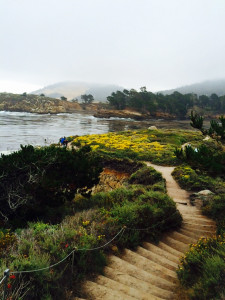 Carmel-by-the-Sea, CA. 2015